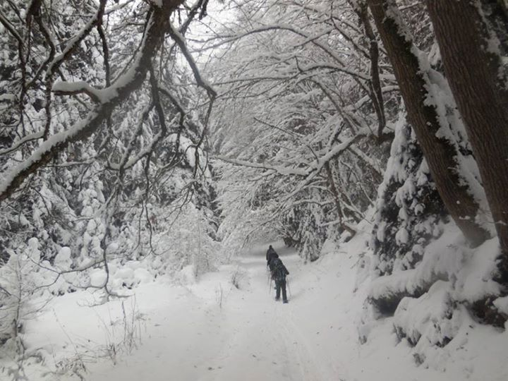 Winter in Borjomi-Kharagauli