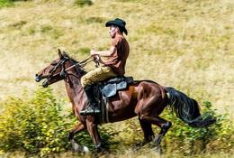 horse - Georgia Tour