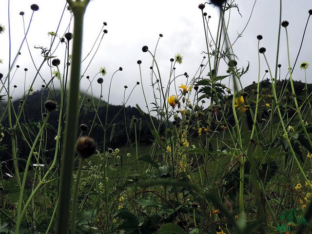 Grass in Tusheti