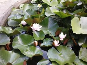 Тбилисский ботанический сад