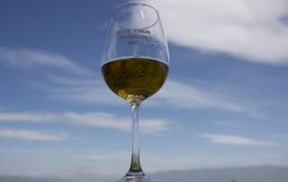 New wine festival 2016