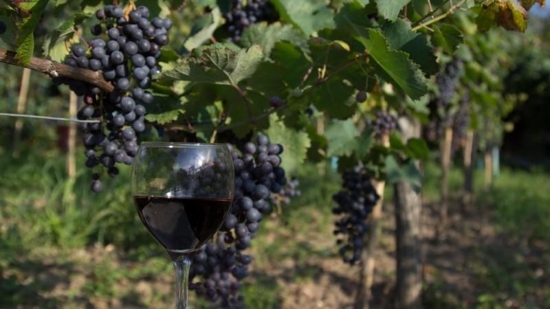 wine tour in Western Georgia